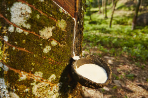History of Rubber Holz Rubber